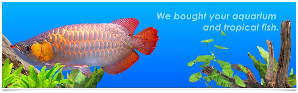 【神奈川】熱帯魚・中古水槽・器材の買取販売