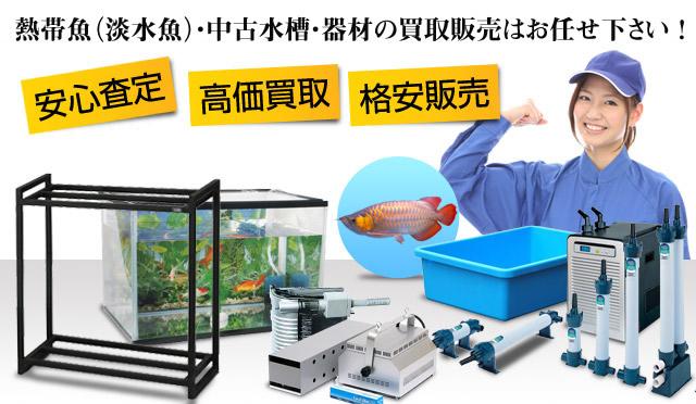 熱帯魚、水槽・器具の買取・販売はAQUAリサイクルへ!
